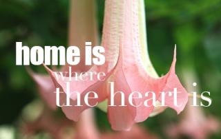 bouillon-home-is-where